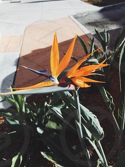 Sidewalk beauty. #landscape #flower #flowers #beauty #beautiful  #nature  photo