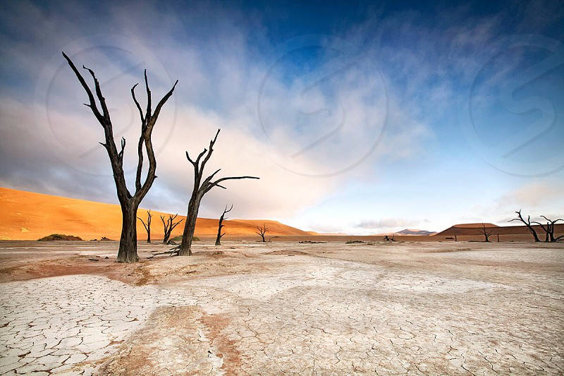 Trees in a salt pan surrounded by sand dunes photo