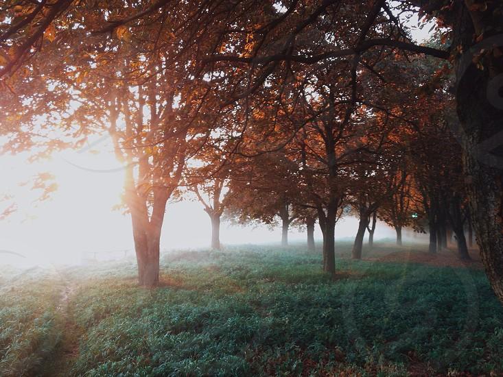 brown autumn trees on green field photo
