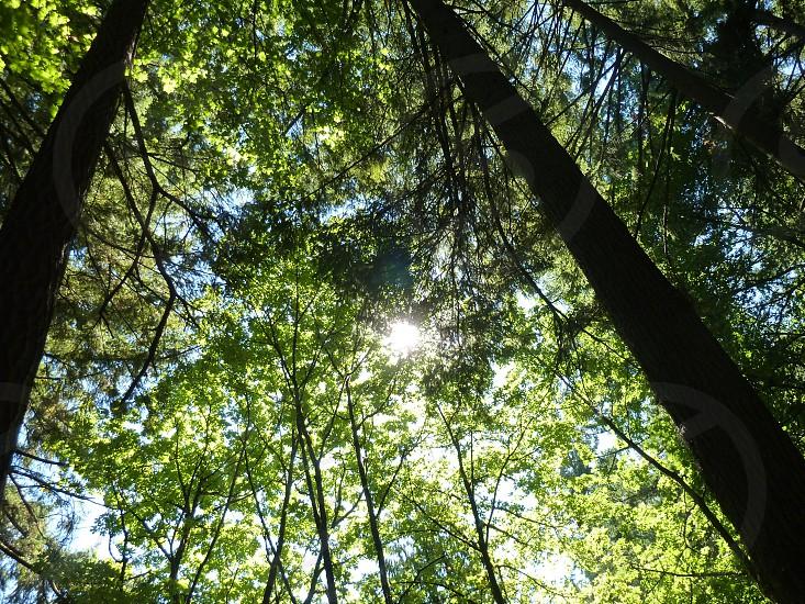 look up - tree canopy photo