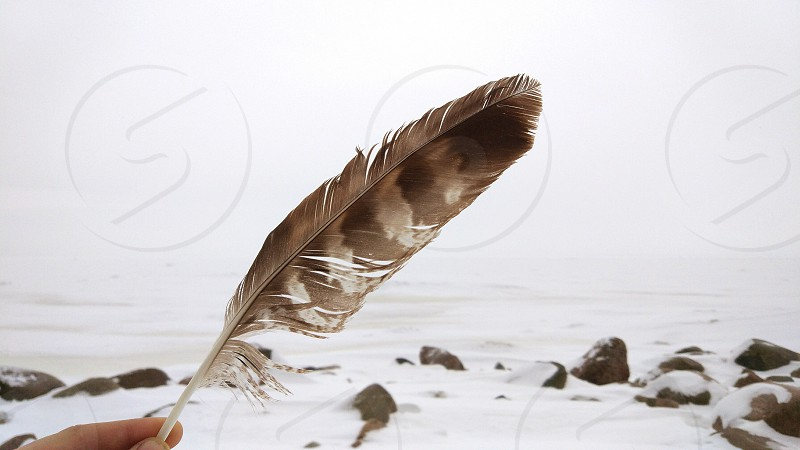 Bird feather in hand snow winter feather bird stones forest frozen weather cold photo
