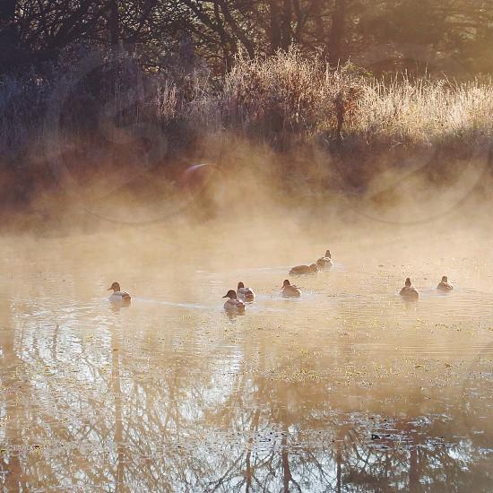 ducks on pond photo photo