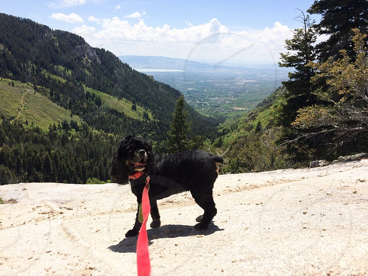 Dog view mountain  photo