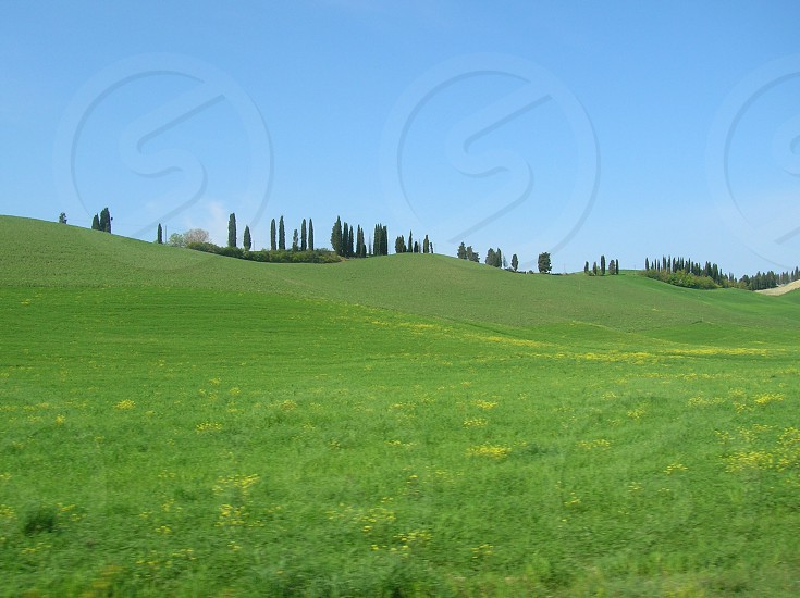 green field with pine trees  photo