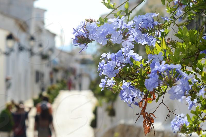 city flowers photo