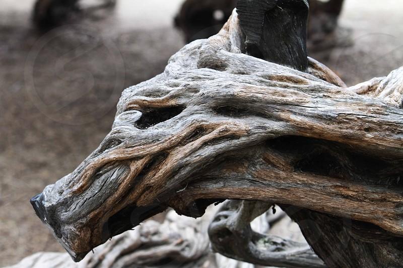 Wood Doberman La Jolla Cove tree photo