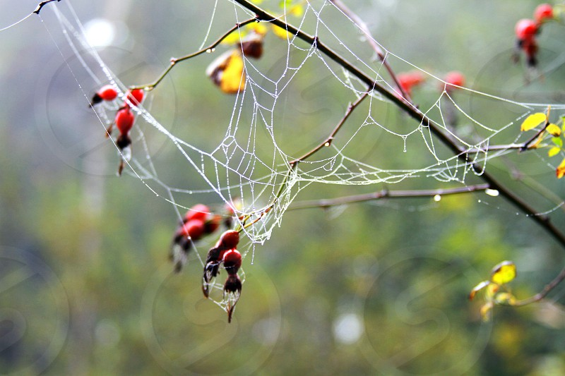 Misty spider web on a crisp fall morning. photo