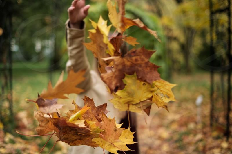 girl throws beautiful autumn leaves  photo