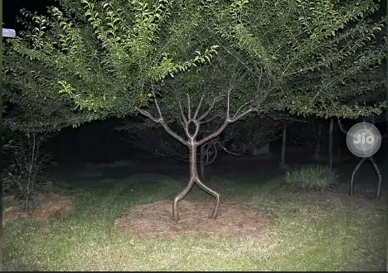 Tree man...... photo