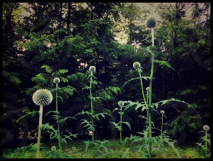 Flowers trees foliage green nature garden lush woods summer balls exotic plants  photo