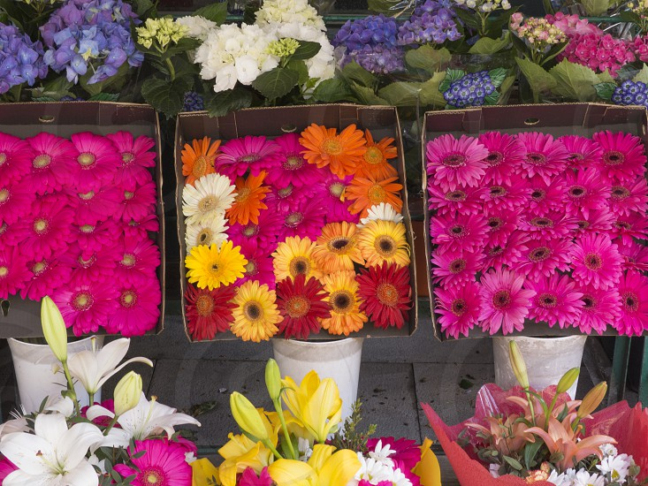 Spring flower stand in Rome Italy photo