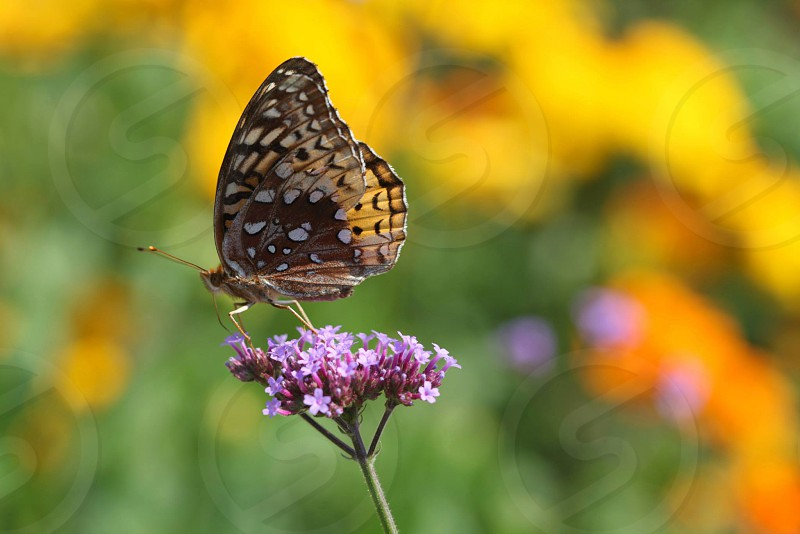 Painted Lady butterfly on top of purple flower in tilt-shift photography photo
