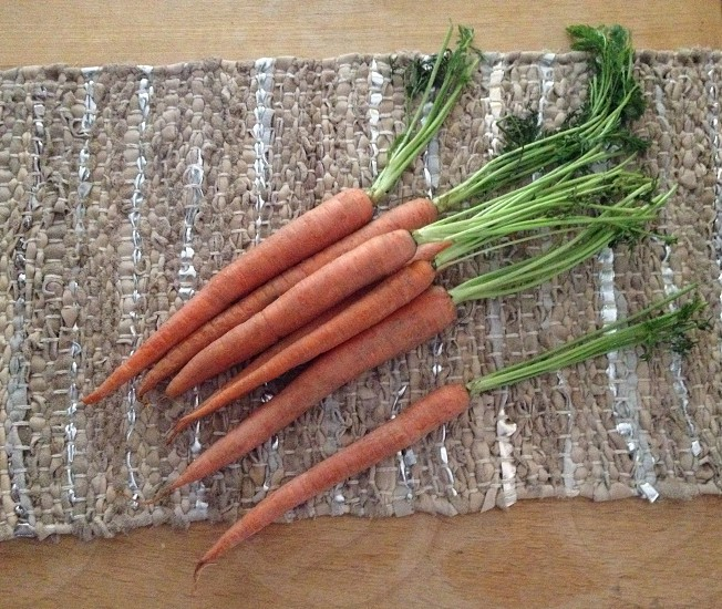 orange carrots photo