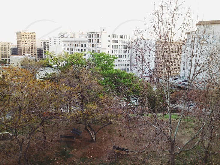 leafless trees in a city park photo