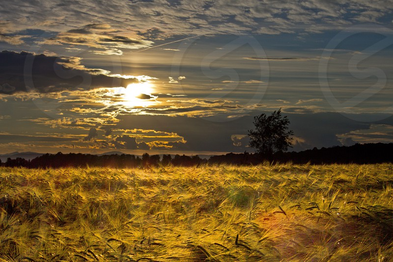 Sunset atmosphere cloud clouds dawn day dusk environment evening heaven horizon landscape light orange field wheat outdoor peace scenery sky season summer sun sunlight sunshine tranquil travel weather photo