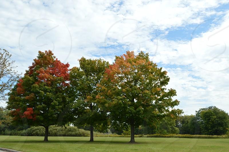 three green tree photo