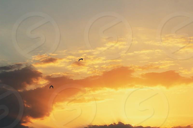 Golden birds #sunsets #sunrise #nature #beautiful #photography #amazing   photo