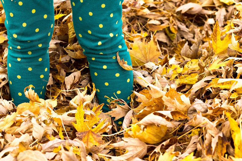 person in green and yellow polka dot pants standing on yellow maple leaves photo