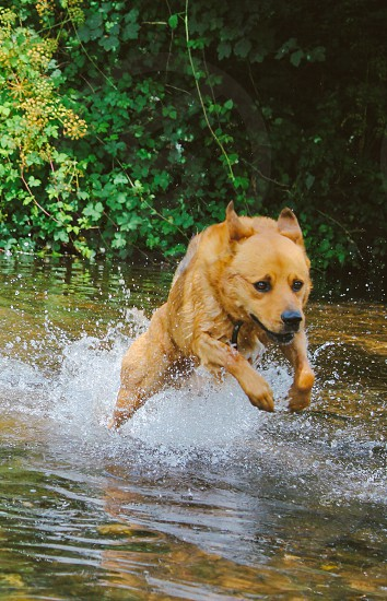 Dog energy water fast speed photo
