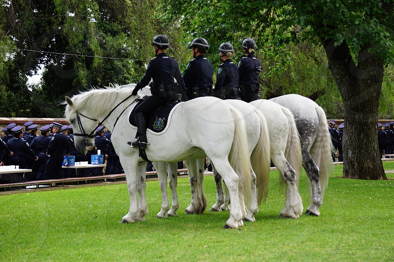 Police Greys. 100 years of women in policing photo