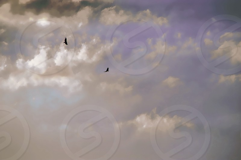Blue cloudy sky with two birds soaring in a distance photo