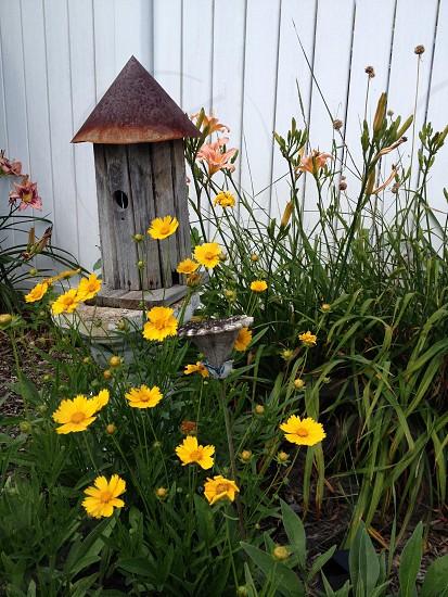 Mid-Summer Flowers photo