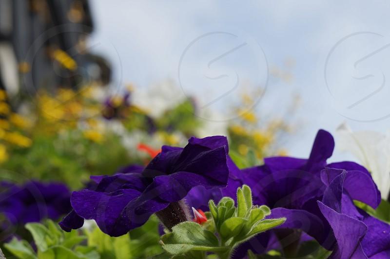 flowers color purple spring  photo