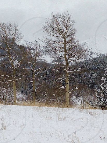 Winter mountains Colorado snow covered trees snow covered ground photo