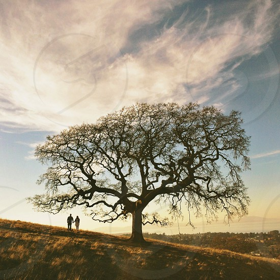man and woman holding hands under the tree photo