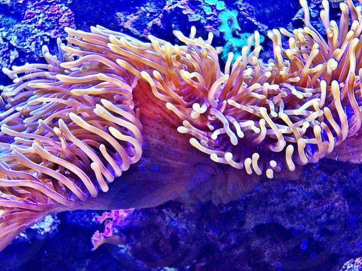 Corals Sweden photo