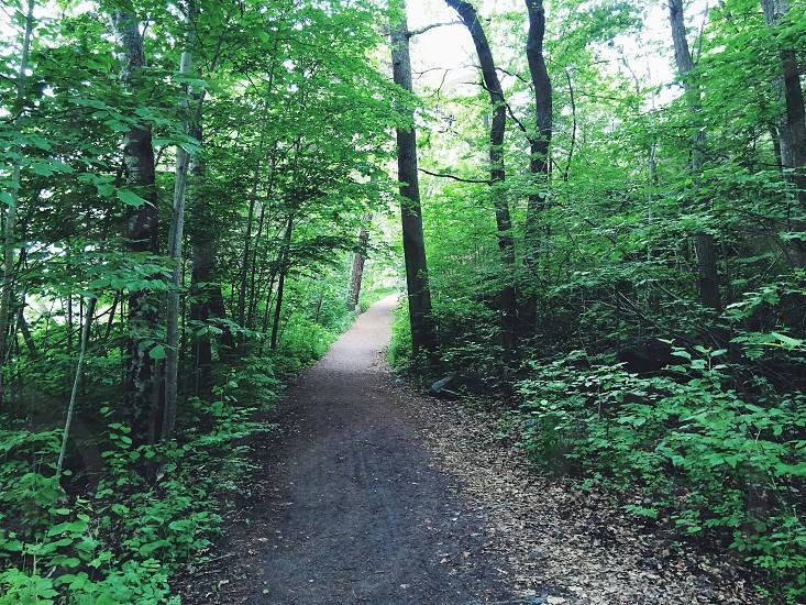 gray pathway photo