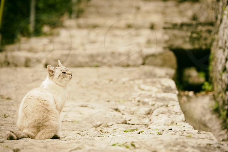 white coated cat photo