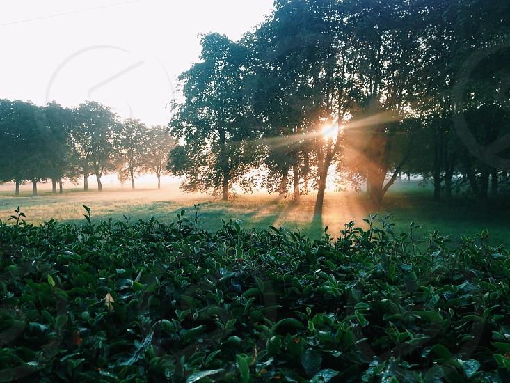 Golden sunrise photo