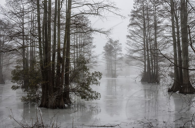 landscape photography of swamp with trees and fogs during daytime photo