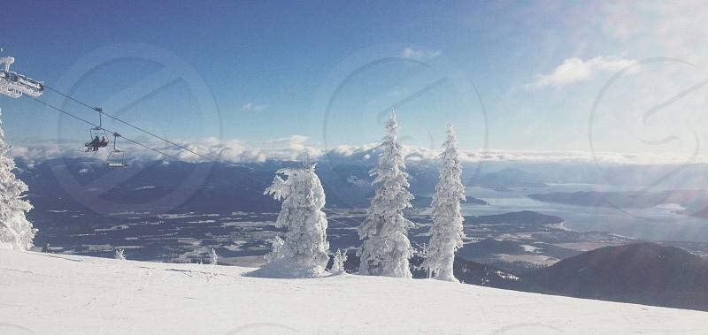 view of white snow tree photo