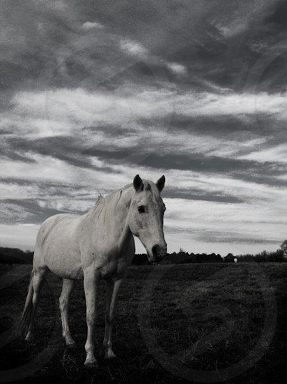 horsestormblackwhite photo