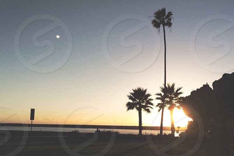 sunlight passing through palm trees at the ocean photo
