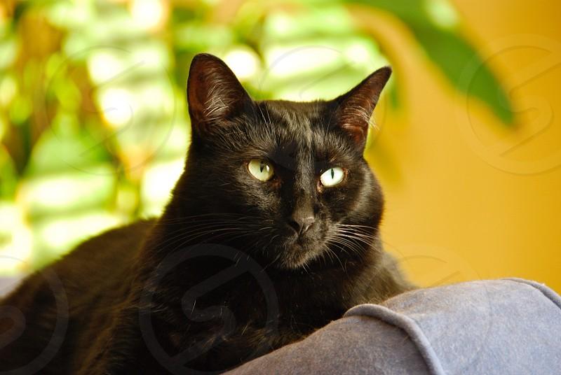 Resting feline photo