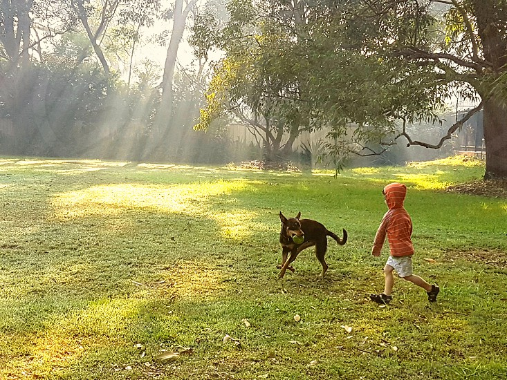 afternoon fun with a fury friend on a smoky day photo