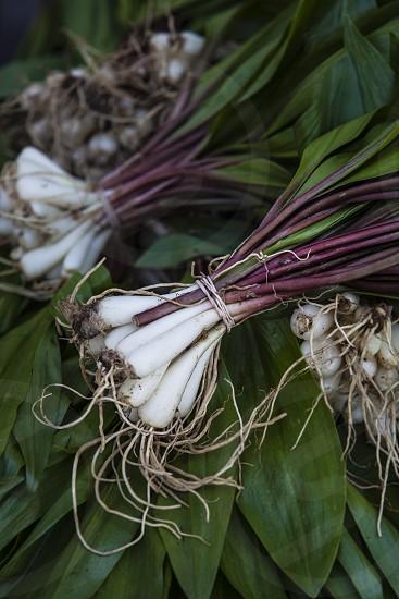ramps spring springtime onions delicate wild food cooking seasonal season photo
