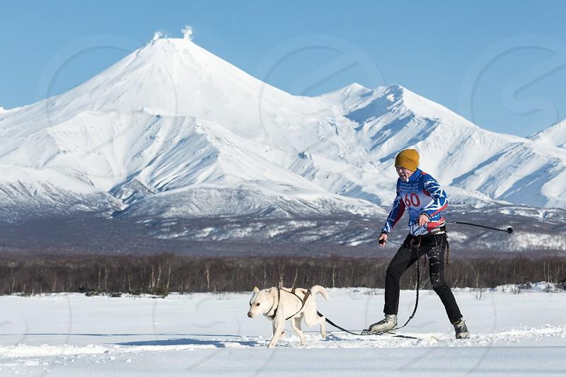 PETROPAVLOVSK KAMCHATKA RUSSIA - DEC 10 2016: Skijoring - competition for Cup of Kamchatka Region on background of Avacha Volcano. Skier-racer Tishkin Vitaly sled dog Alaskan husky nicknamed King. photo