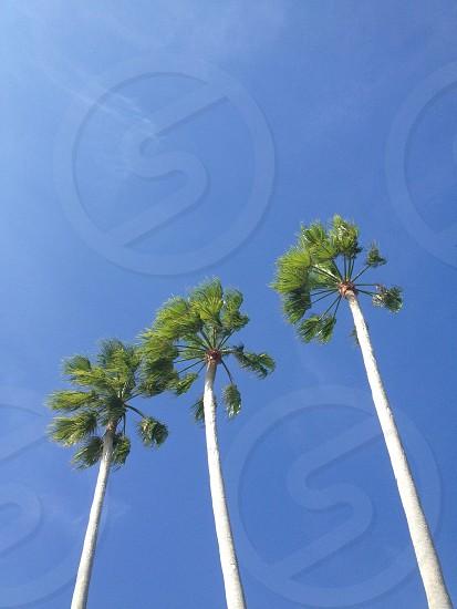 Sunny Miami day. #palmtrees photo
