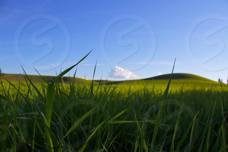 green grass fields photography  photo