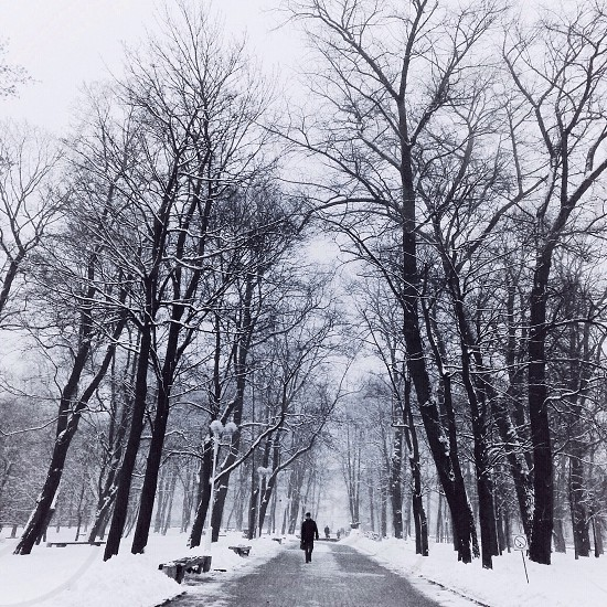 person walking on the road between snow covered leafless trees photo
