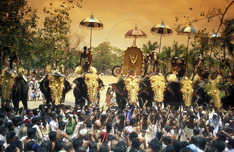 the Elephants at the Pooram Festival in Thrissur in the province of Kerala in India. photo