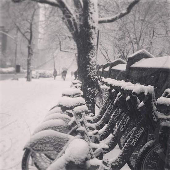 brooklyn citi bike photo