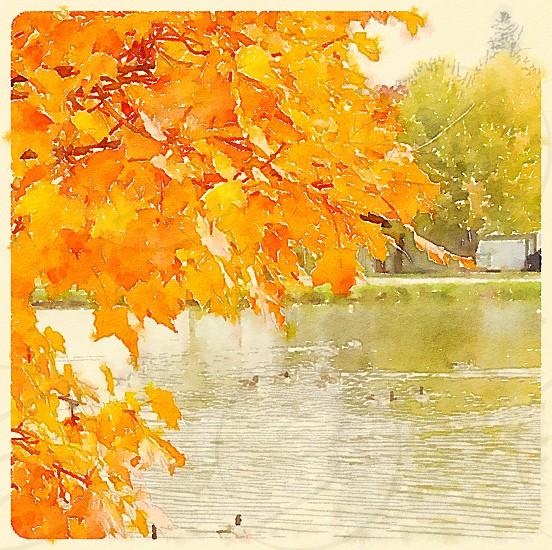 Autumn foliage on a small-town pond. photo