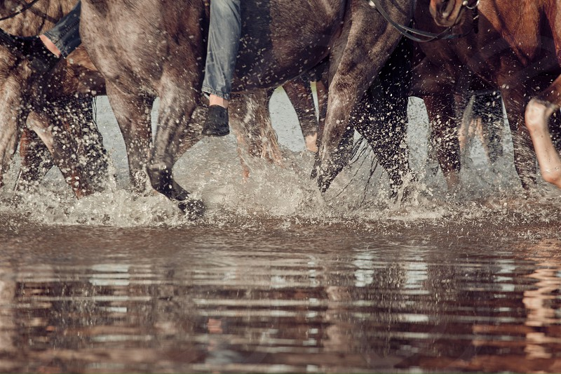 Horse  herd legs splash water river detail summer equine equestrian riding props reflection detail photo