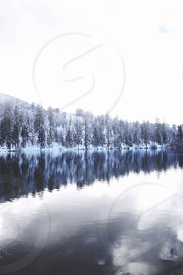 snow covered pine trees beside river photo