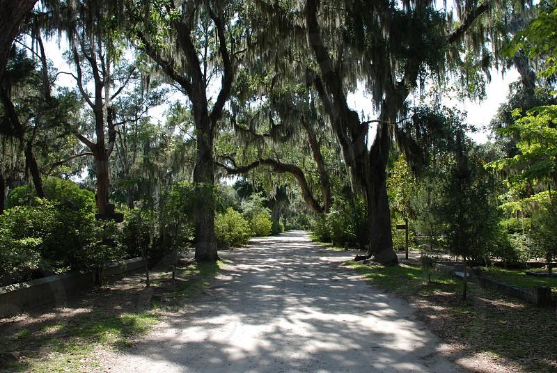Savannah Ga photo